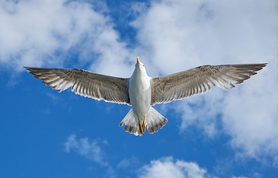 La nueva forma de volar, es volar de nuevo